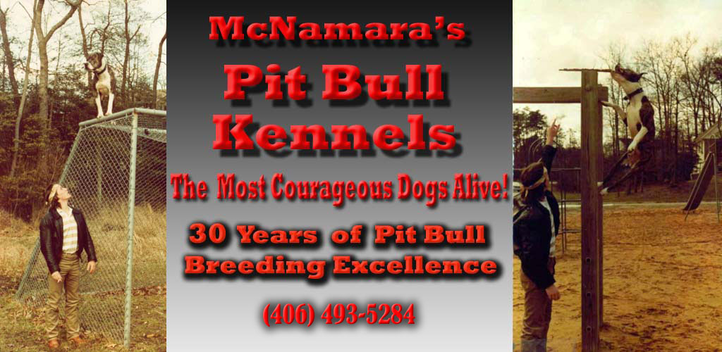 to bossy kennels!!! home of arnold the terminator and the real xxl ...