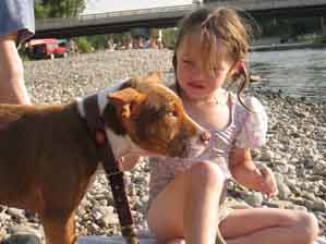 Red Nose PitBull at the River Swimming with the Kids